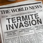Termites in Guelph