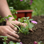 Tend to Your Garden to Boost Curb Appeal