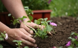 Gardening for Curb Appeal