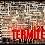 Selling a Home in the Guelph Termite Zone