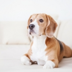 Pets and Home Sales - Guelph Real Estate Blog